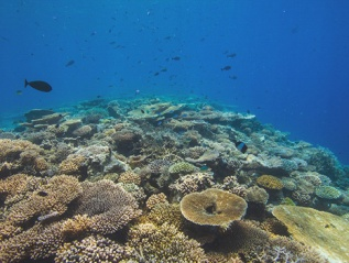 Underwater Camera Operation